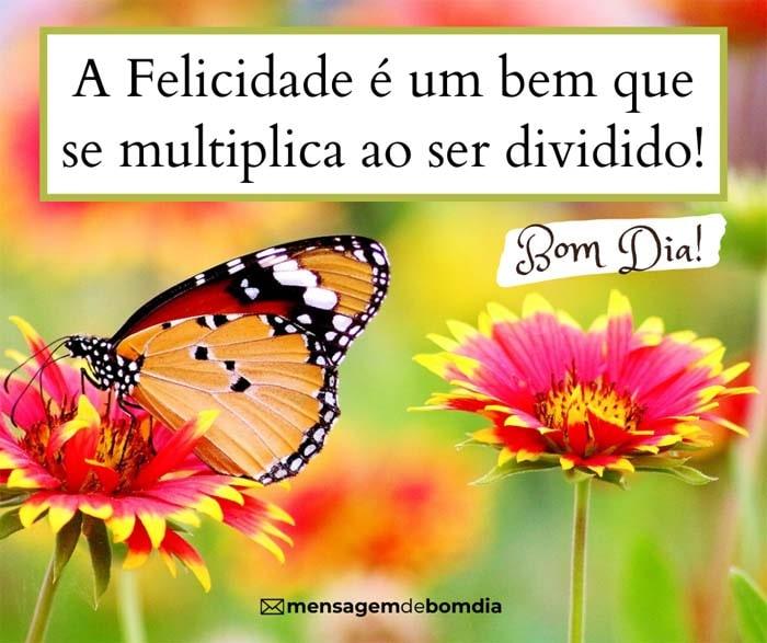 Felicidade é um bem que se multiplica ao ser dividido